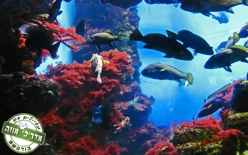 בתמונה: מבט על עולם הים באקווריום